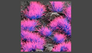 Alien Neon 4mm Wild Tufts